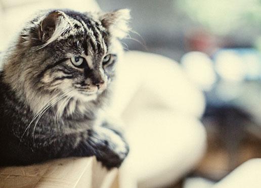 clinique vétérinaire chat