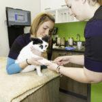 technicien en santé animale