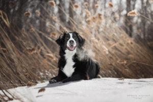 chien clinique vétérinaire